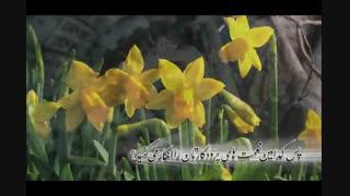 ترجمه تصویری  سوره الرحمن