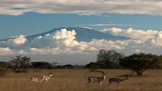 حیات وحش حیرت انگیز آفریقا _قسمت سوم