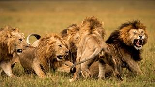 حیات وحش حیرت انگیز آفریقا _قسمت چهارم