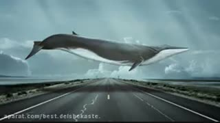 پارت نهم و دهم رمان نهنگ آبی