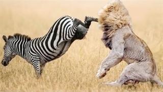 مبارزه بین حیوانات
