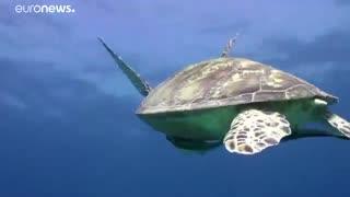 صندوق جهانی طبیعت: ۶۰ درصد حیات وحش جهان در نیم قرن گذشته از بین رفته است…